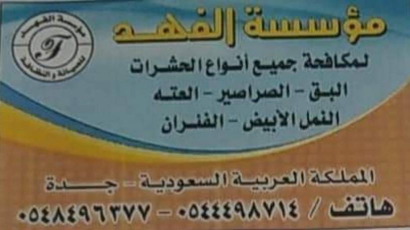 shrk-alfhd-lmkafh-alhshrat-oalkda-aalyha-big-1